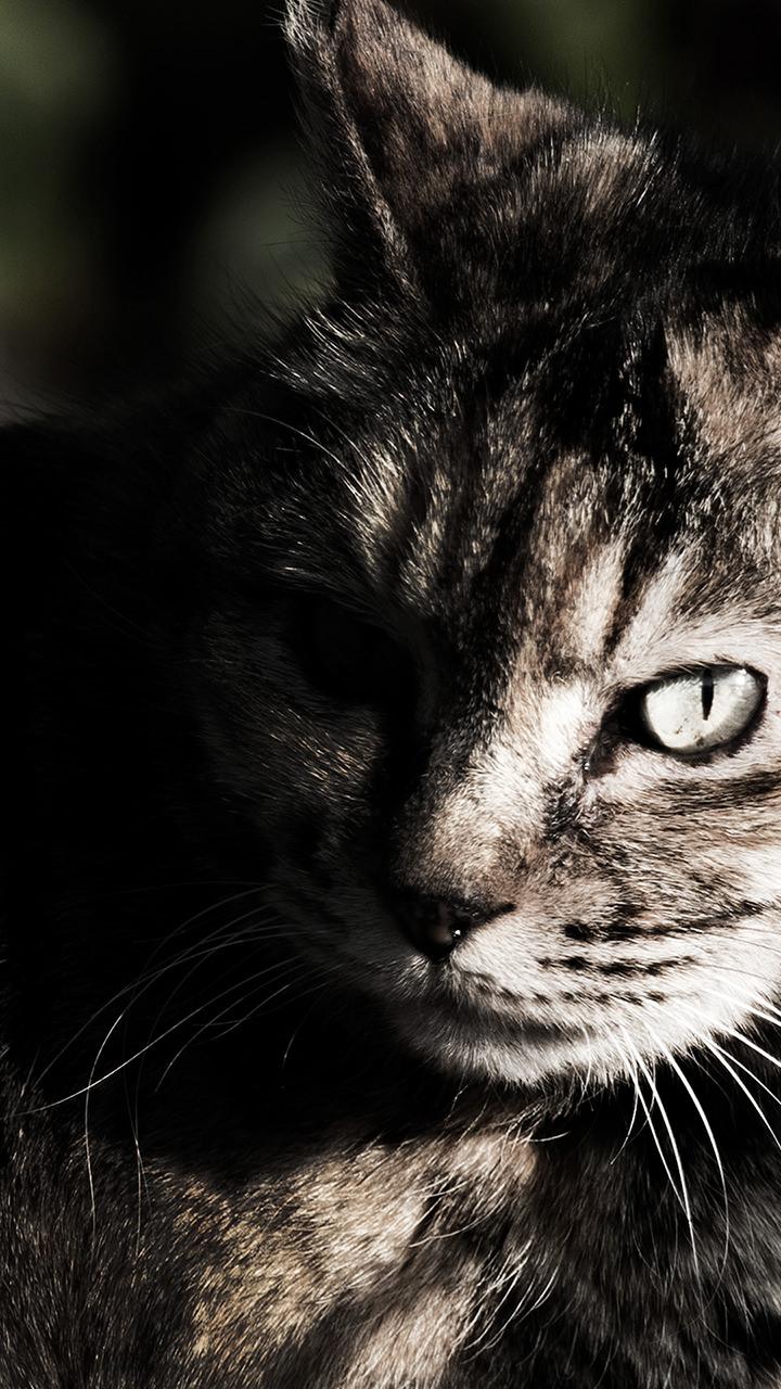 睨む猫のiphoneスマホ無料壁紙 待ち受け N8 フォトック