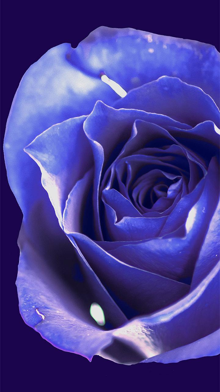 紫のバラのiphoneスマホ無料壁紙 待ち受け N3 フォトック