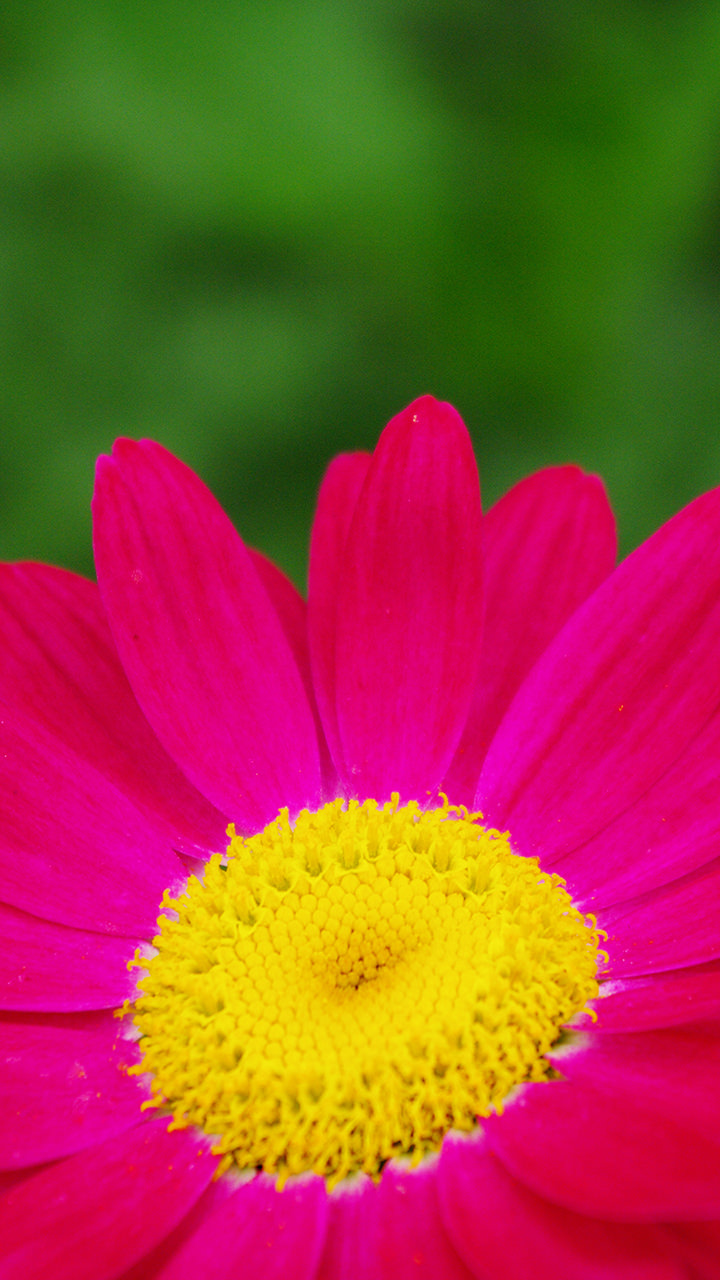 花のiphoneスマホ無料壁紙 待ち受け 692 フォトック
